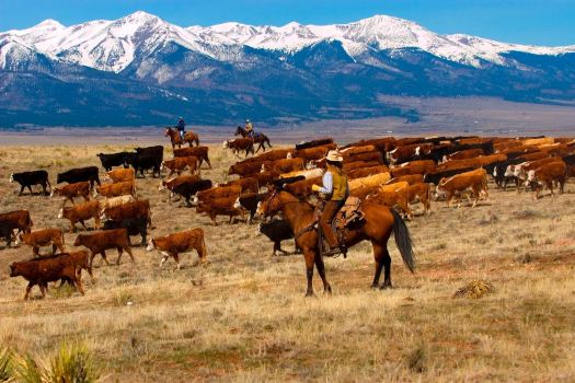 ranching, holistic management, climate change, desertification, allan savory